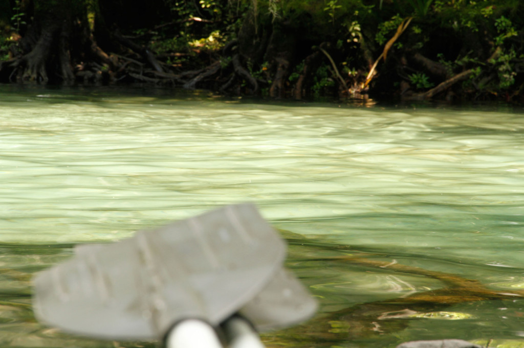 blurry paddles clear water background crystal river